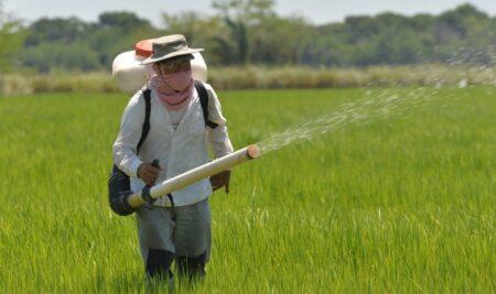 El arroz integral ahora es beneficiado
